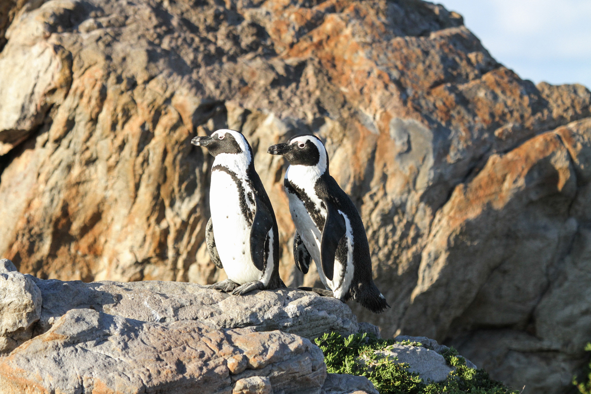 web-grootbos-experience-eco-boat-penguin-07.jpg
