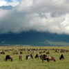 Ngorongoro Plains animals with clouds.jpg